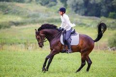 Молодая женщина всадника скакать на лошади залива на луге Стоковое Изображение