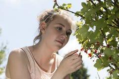 Молодая женщина выбирает смородины в саде стоковые изображения