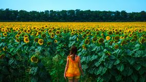 Молодая женщина в большом поле солнцецветов Стоковая Фотография RF