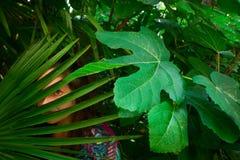 молодая женщина в тропическом лесе стоковые фото