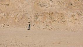 Молодая женщина идет босоногое сквозное пустыня между огромной горой акции видеоматериалы