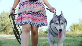 Молодая женщина, на день лета солнечный, идет через лес с осиплой собакой сток-видео