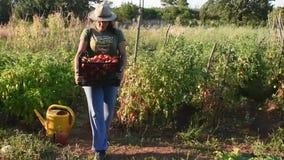 Молодая женщина нося корзину с овощами сток-видео