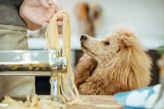 Молодая женщина при ее собака делая handmade макаронные изделия Стоковые Изображения