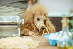 Молодая женщина при ее собака делая handmade макаронные изделия Стоковые Фотографии RF