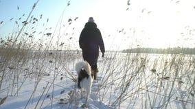 Молодая женщина при собака идя среди тростников на пляже замороженного моря, озера видеоматериал