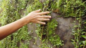 Молодая женщина путешественника идя и касаясь со стеной утеса руки с мхом Спокойный и беспечальный отснятый видеоматериал перемещ сток-видео