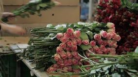 Молодая женщина работает с свежими розами на фабрике цветка акции видеоматериалы