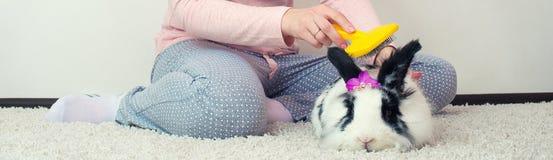 Молодая женщина расчесывает ее кролика Симпатичные любимчики стоковое фото rf