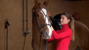 Молодая женщина регулируя уздечку лошади на конюшне видеоматериал