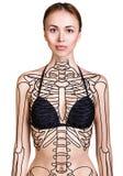 Молодая женщина с скелетом краски на ее теле стоковое изображение rf