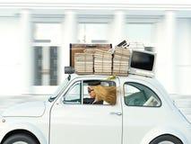 Молодая женщина управляя с автомобилем к градации перевод 3d Стоковые Фото