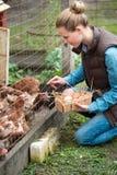 Молодая женщина фермера собирая свежие яичка в корзину на курице fa стоковая фотография rf