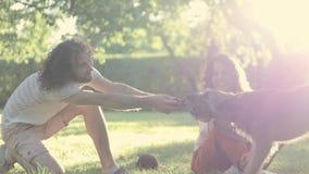 Молодая жизнерадостная пара играя с их собакой на парке на летний день сток-видео