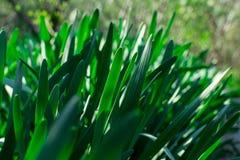 Молодая зеленая трава День Солнца Будить природы стоковое изображение rf