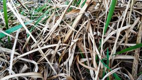 Молодая и сухая трава около крупного плана озера стоковые изображения