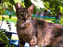 Молодая киска в дворе Стоковое Фото