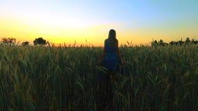 Молодая красивая девушка идет среди полей с колосками в вечере на заходе солнца движение медленное видеоматериал