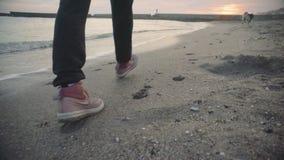 Молодая красивая женщина идя с сибирской сиплой собакой на пляже на заходе солнца, замедленном движении видеоматериал