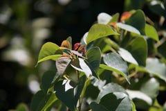 Молодая листва и новый всход стоковая фотография rf