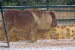 Молодая лошадь стоит в загородке стоковое изображение rf