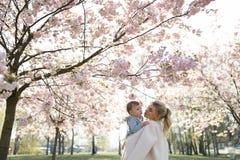 Молодая мама матери держа ее маленького ребенка мальчика сына младенца под цвести вишневыми деревьями САКУРЫ с падая розовыми леп стоковое фото rf