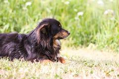 Молодая милая собака лежа на том основании в сельском поле стоковые изображения rf