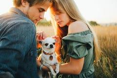 Молодая пара сидит на желтой траве осени и обнимает их белую собаку породы чихуахуа стоковые фото