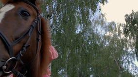 Молодая привлекательная девушка в защитном шлеме и розовом платье сидит на коричневой лошади на предпосылке деревьев и неба _ акции видеоматериалы