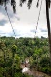 Молодая туристская женщина отбрасывая на скале в тропическом лесе джунглей и реке тропического острова Бали Качание среди пальмы  стоковое изображение
