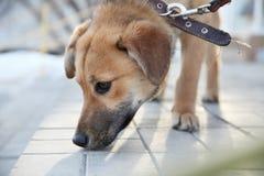 Молодая шавка собаки обнюхивает плитку, конец-вверх стороны стоковые изображения