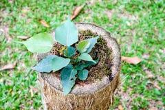 молодое дерево было рождено дальше умирает сад старого дерева и зеленой травы Стоковое фото RF