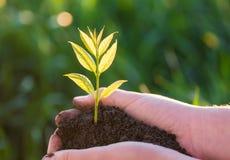 Молодое зеленое растение в руках жизнь новая изображения экологичности принципиальной схемы еще многие мое портфолио Стоковое Изображение