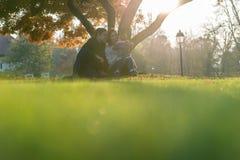 Молодое ликование семьи в заходе солнца осени сидя под деревом стоковая фотография rf
