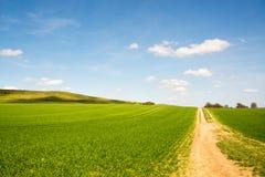 Молодое поле плантации на холмистом ландшафте на солнечный день весной Стоковое Изображение