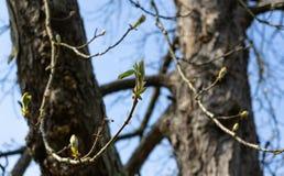 Молодой всход на дереве стоковое фото rf