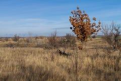 Молодой дуб Стоковая Фотография RF