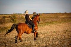 Молодой женский всадник на лошади залива в поле стоковая фотография