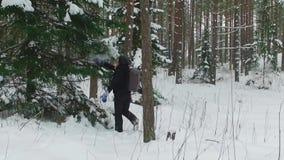 Молодой женский пеший туризм с рюкзаком в красивом лесе зимы сток-видео