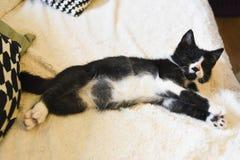 Молодой и слепой кот с, который извлекли зрачками стоковое фото rf