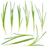 Молодой комплект зеленого лука стоковая фотография rf