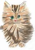 Молодой котенок смотрит вас иллюстрация штока