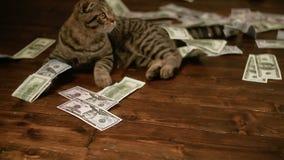 Молодой кот играя с деньгами видеоматериал