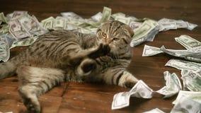 Молодой кот играя с деньгами акции видеоматериалы