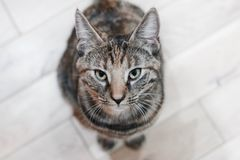 Молодой кот красоты Стоковое Изображение