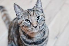 Молодой кот красоты Стоковые Изображения RF