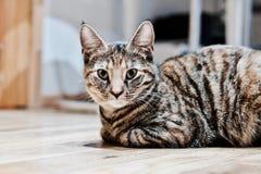 Молодой кот красоты Стоковые Фотографии RF