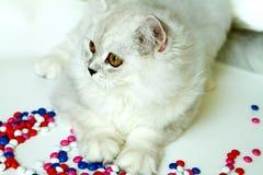 Молодой кот на белой предпосылке стоковые изображения rf