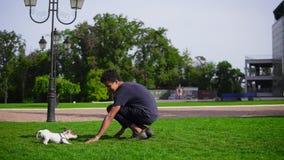 Молодой красивый африканский человек играя с щенком в парке бежать совместно на зеленой траве Малые породы Джек собаки видеоматериал