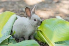 Молодой кролик есть листья в саде Стоковое Изображение